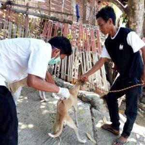 Cegah Rabies, Dinas Pertanian Vaksin 3.197 Anjing Kucing dan Kera