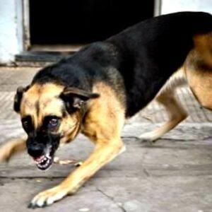 Bocah di Kelurahan Ule Digigit Anjing Rabies
