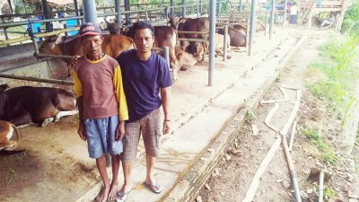 Syahbuddin, Wakil Rakyat yang Memotivasi Warga Beternak Sapi