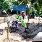 Janji Aspal tak Kunjung Ditepati, Warga Pandai Tanam Pohon Pisang di Jalan