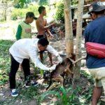 Cegah Kasus Gigitan Anjing, Dinas Pertanian Terus Vaksinasi Rabies