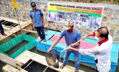 KLS Kelurahan Santi Panen Perdana Ikan Karamba Jaring Apung