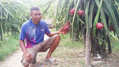 Awalnya Dicibir, Sahbudin Kini Sukses Bikin Destinasi Wisata Buah Naga