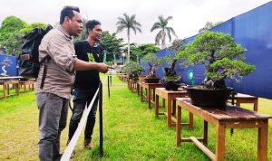Pameran dan Kontes Bonsai Tingkat Nasional Digelar di Kota Bima