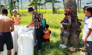 Satker Bulog dan Dinas Pertanian Dompu Cek Harga Gabah