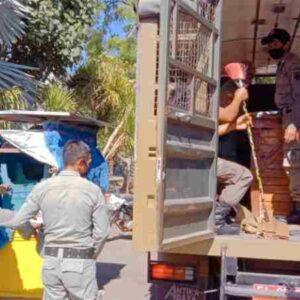 Bikin Kumuh, Pol PP Amankan Fasilitas Pedagang di Serasuba dan Amahami